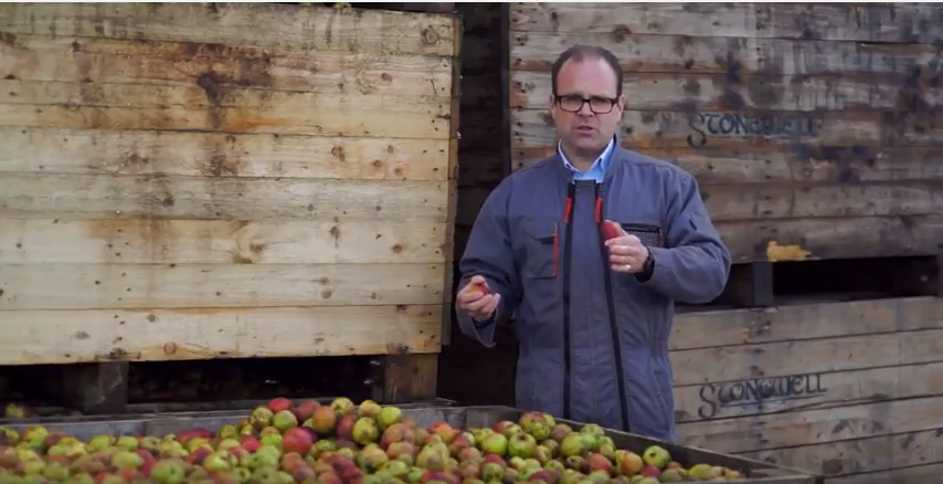 turning-apples-into-stonewell-cider-youtube