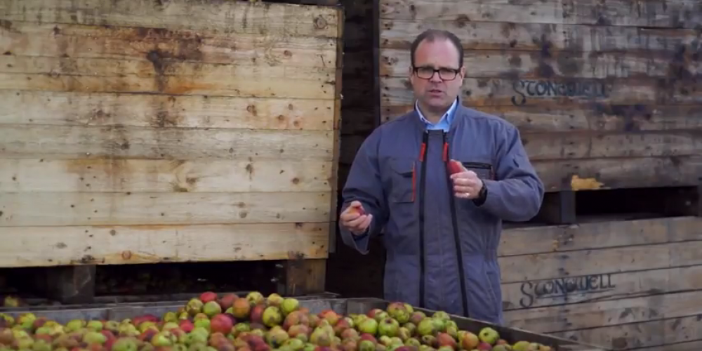 Video: Here's how craft cider is made in Ireland.