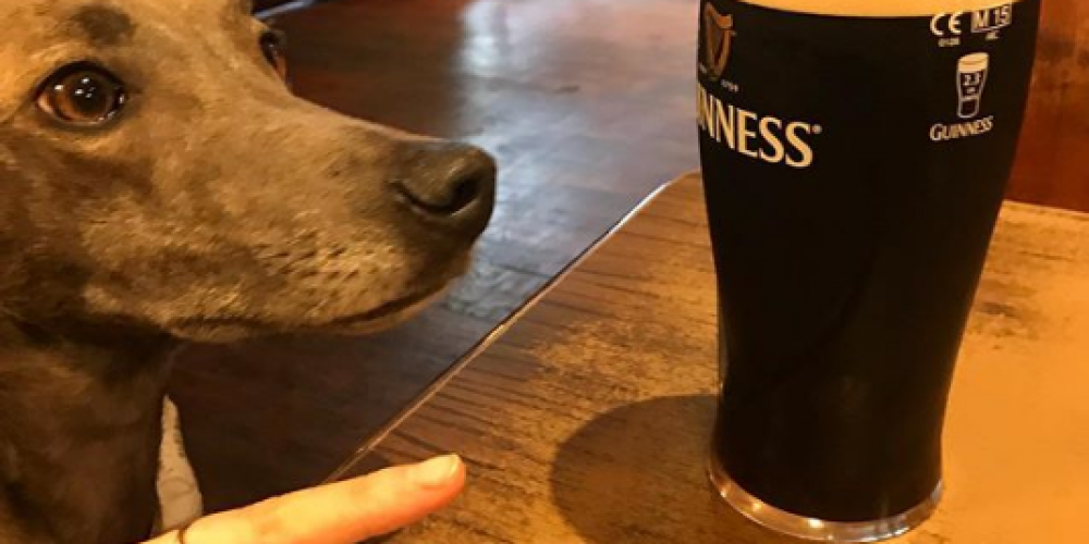 Photos of dogs with pints in pubs.